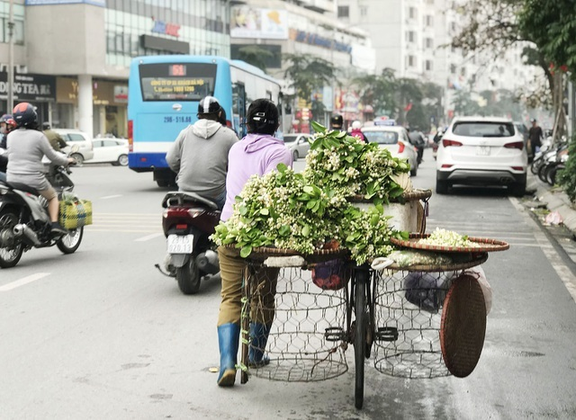Hoa bưởi xuống phố, khách giành nhau từng chùm-1