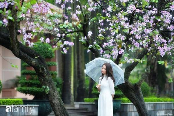 Những ngày ảm đạm vì dịch bệnh và mưa rét, chẳng ai nhận ra hoa ban tím ở Hà Nội đã lặng lẽ bung nở từ khi nào-1