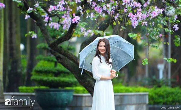Những ngày ảm đạm vì dịch bệnh và mưa rét, chẳng ai nhận ra hoa ban tím ở Hà Nội đã lặng lẽ bung nở từ khi nào-5