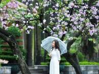Những ngày ảm đạm vì dịch bệnh và mưa rét, chẳng ai nhận ra hoa ban tím ở Hà Nội đã lặng lẽ bung nở từ khi nào