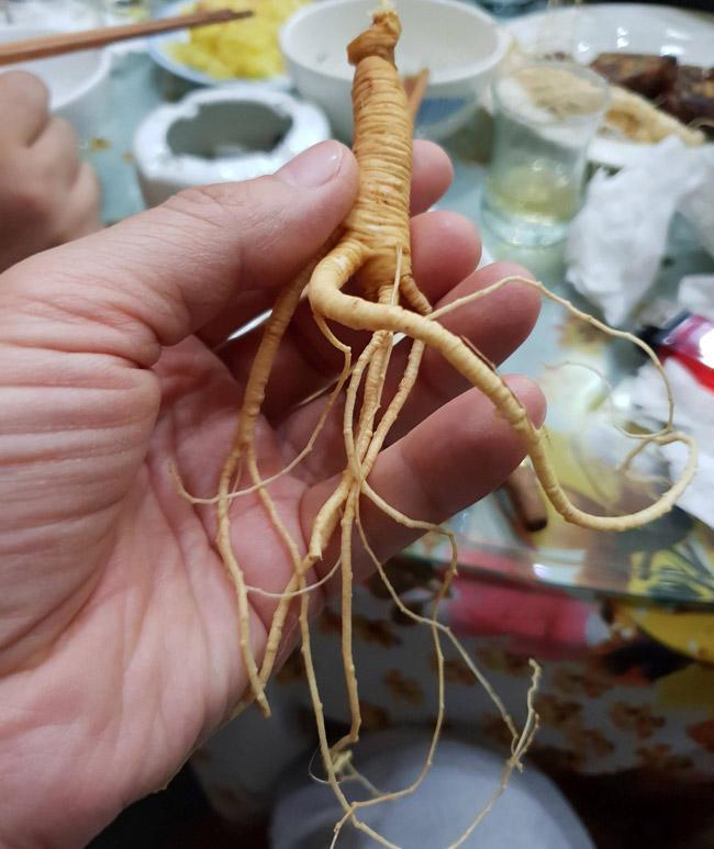 Bộ sưu tập sâm Hoàng Thất giá tiền tỷ của đại gia Hà thành-7