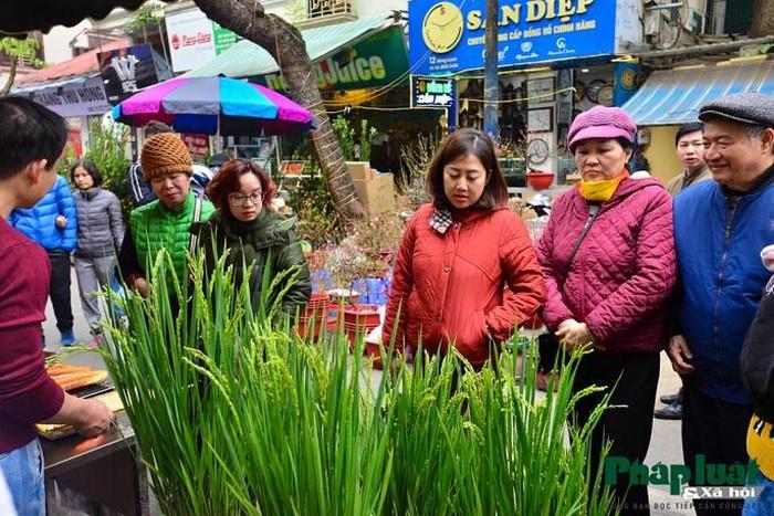 Ngỡ ngàng với lúa cảnh bonsai trên phố-10