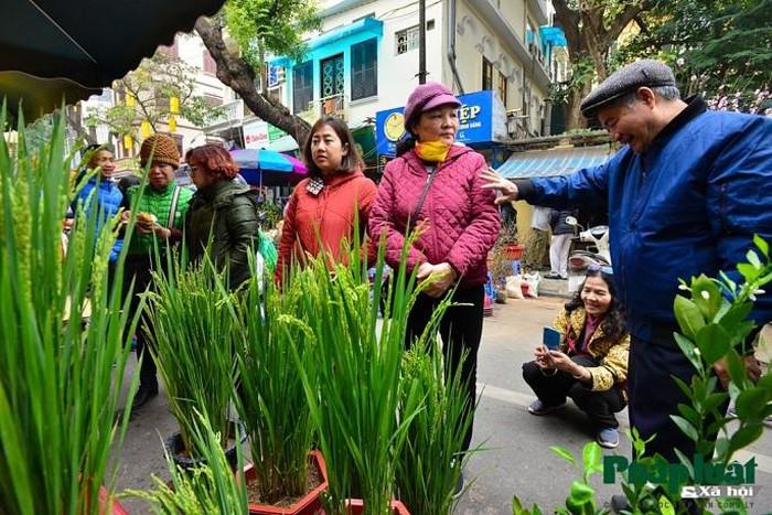 Ngỡ ngàng với lúa cảnh bonsai trên phố-12