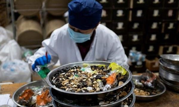 Loạn thuốc chống virus Corona: Phân bò, kim chi, hạt cau cũng được sử dụng-2