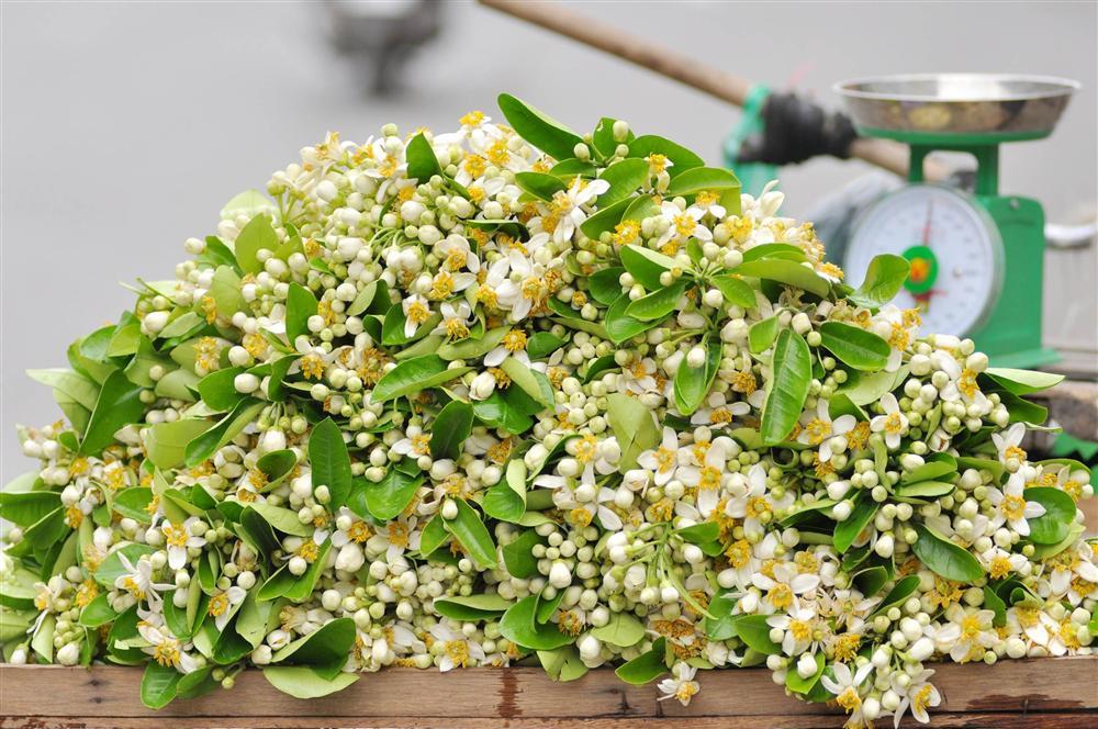 Đầu mùa gánh hoa bưởi xuống phố, giá hơn 300.000 đồng/kg vẫn đắt khách-2