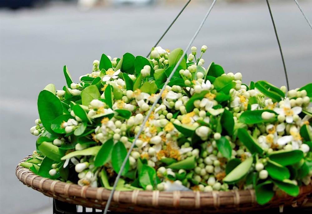 Đầu mùa gánh hoa bưởi xuống phố, giá hơn 300.000 đồng/kg vẫn đắt khách-6