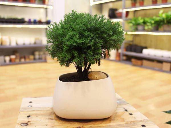 6 loại cây gọi tài lộc, đầu năm nhất định phải mua đặt bàn làm việc-6