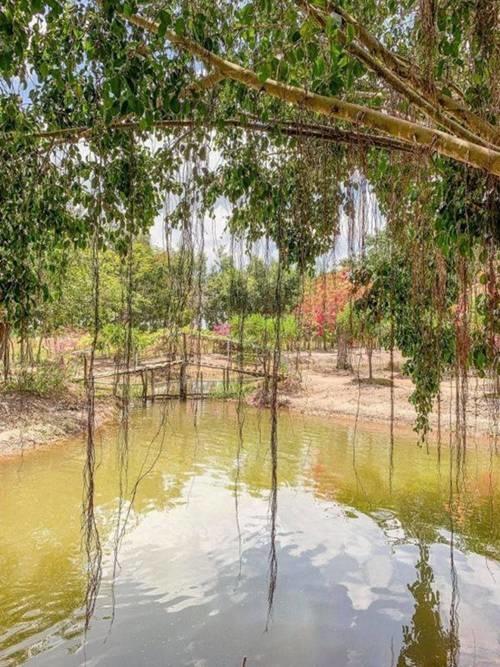 Mỹ nhân chán phố về quê: Lý Nhã Kỳ làm nông trường, Minh Hằng mua đất trồng cây, nuôi cá-3
