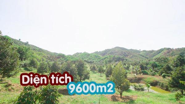 Mỹ nhân chán phố về quê: Lý Nhã Kỳ làm nông trường, Minh Hằng mua đất trồng cây, nuôi cá-6
