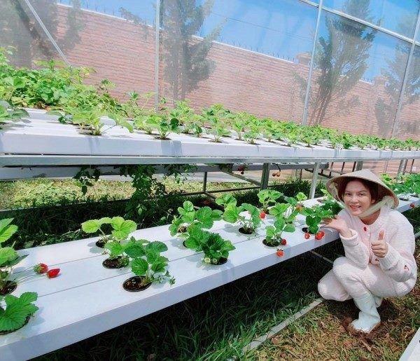 Mỹ nhân chán phố về quê: Lý Nhã Kỳ làm nông trường, Minh Hằng mua đất trồng cây, nuôi cá-11