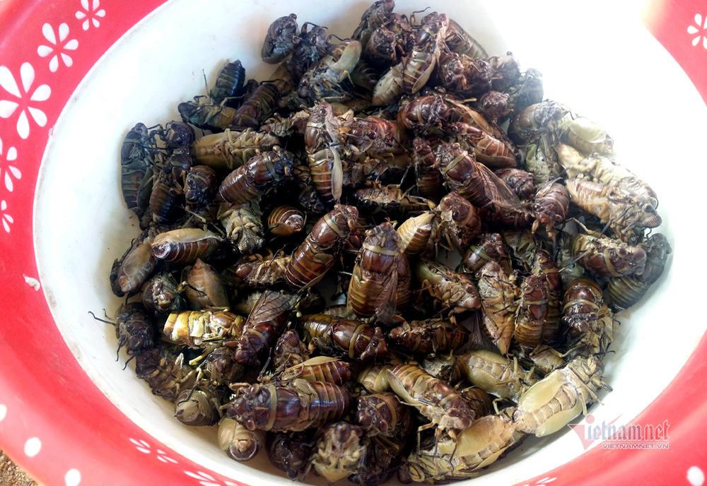 Khu chợ côn trùng bán đầy bọ xít, châu chấu... hiếm có Việt Nam-3