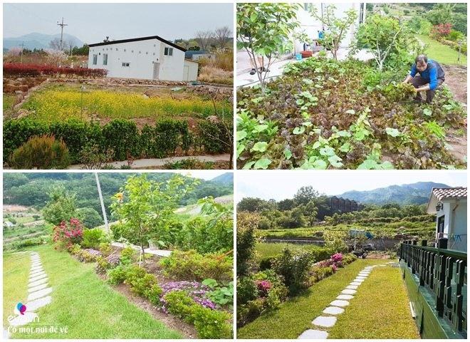 Thương vợ liệt nằm 1 chỗ, cụ ông Hàn Quốc xây cả khu vườn khiến con dâu Việt thán phục-4