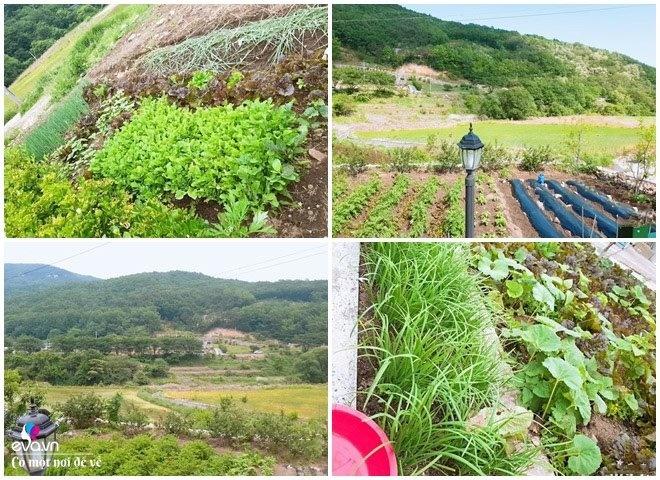 Thương vợ liệt nằm 1 chỗ, cụ ông Hàn Quốc xây cả khu vườn khiến con dâu Việt thán phục-13