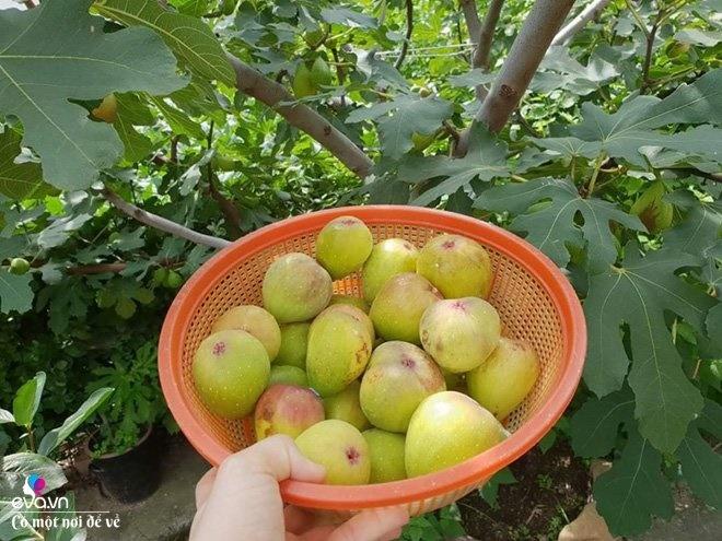 Thương vợ liệt nằm 1 chỗ, cụ ông Hàn Quốc xây cả khu vườn khiến con dâu Việt thán phục-15