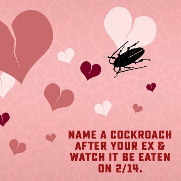 Dịch vụ đặc biệt cho những trái tim tan vỡ vào Valentine: Đặt tên người yêu cũ cho gián rồi để nó làm bữa tối của các con vật khác-1