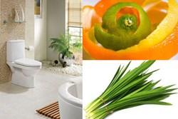 Thách thức trời nồm ẩm, đặt thứ này vào nhà vệ sinh, đảm bảo cả tuần sạch sẽ không mùi hôi