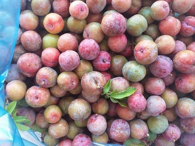 Loạn giá mận Mộc Châu trái mùa bán trên chợ mạng, tiểu thương nhét túi vài triệu/ngày-13