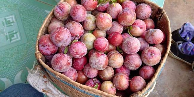 Loạn giá mận Mộc Châu trái mùa bán trên chợ mạng, tiểu thương nhét túi vài triệu/ngày-6