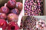 Loạn giá mận Mộc Châu trái mùa bán trên chợ mạng, tiểu thương nhét túi vài triệu/ngày
