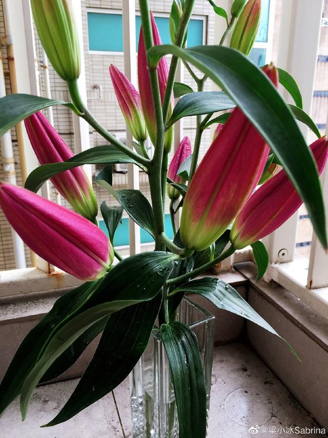 Chuyện tình Chúc Anh Đài - Mã Văn Tài đời thực: Chàng si mê nàng gần 30 mùa Valentine không đổi-7