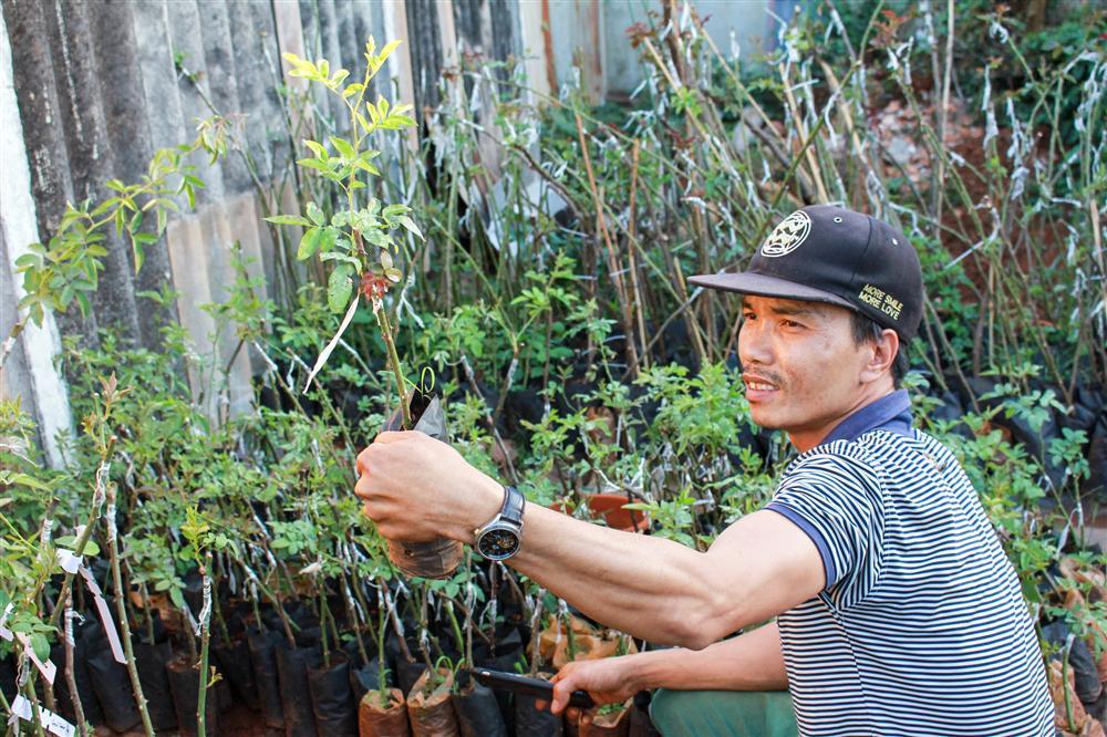 Vườn hồng 400 loài đẹp ngẩn ngơ của kỹ sư bỏ phố về núi-4