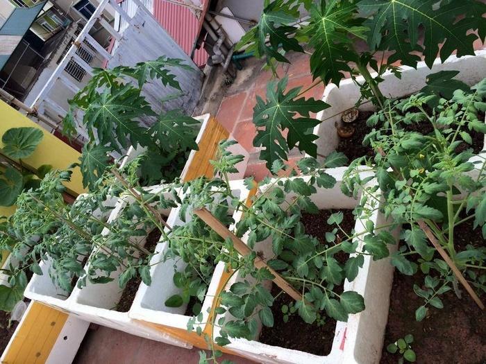 Đã mắt với vườn rau trong thùng xốp ăn không xuể của mẹ đảm Hà thành-3