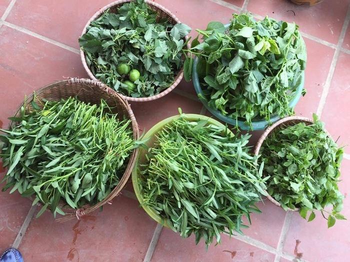 Đã mắt với vườn rau trong thùng xốp ăn không xuể của mẹ đảm Hà thành-12