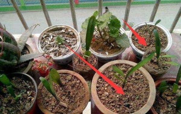Người làm vườn tiết lộ bí quyết cứ trồng là cây xanh tốt, không sợ sâu bệnh hại-1