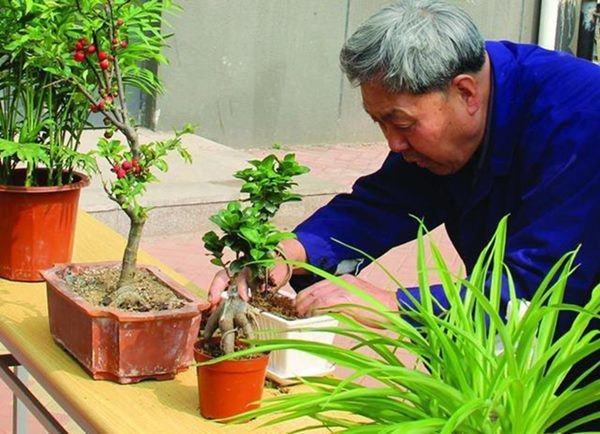 Người làm vườn tiết lộ bí quyết cứ trồng là cây xanh tốt, không sợ sâu bệnh hại-2