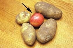 Thấy chồng bỏ quả táo vào trong rổ khoai tây, 1 tháng sau kiểm tra vợ tròn mắt vì bất ngờ
