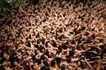 Bất chấp giá lạnh, hàng ngàn người tề tựu dự lễ hội khỏa thân ở Nhật Bản