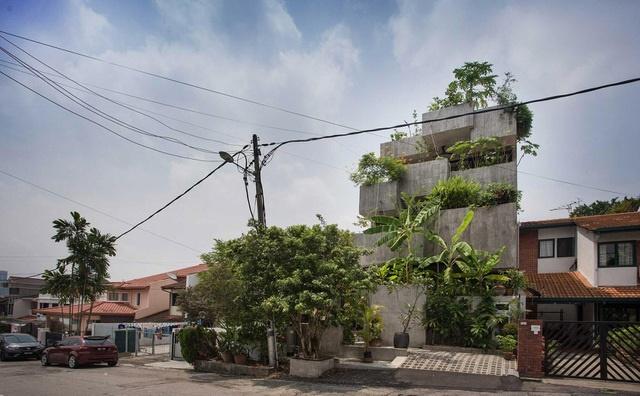 Bất ngờ ngôi nhà 3 tầng trồng hơn 40 loại cây ăn quả giữa phố thị chật chội-1