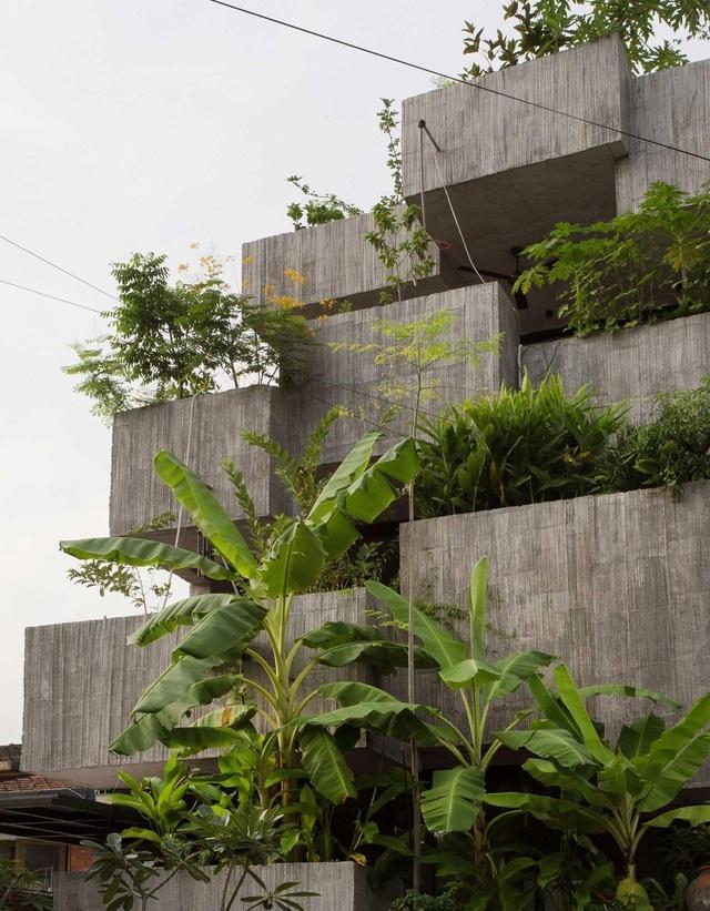 Bất ngờ ngôi nhà 3 tầng trồng hơn 40 loại cây ăn quả giữa phố thị chật chội-2