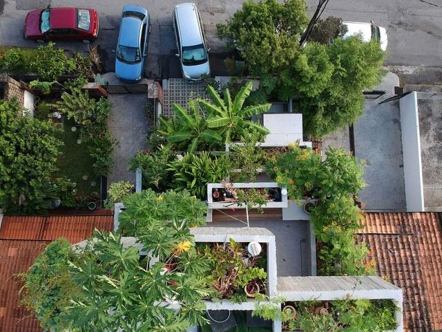 Bất ngờ ngôi nhà 3 tầng trồng hơn 40 loại cây ăn quả giữa phố thị chật chội-3