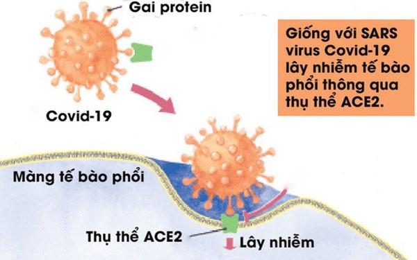 [Infographic] Đây là cách virus Covid-19 tàn phá cơ thể người-3