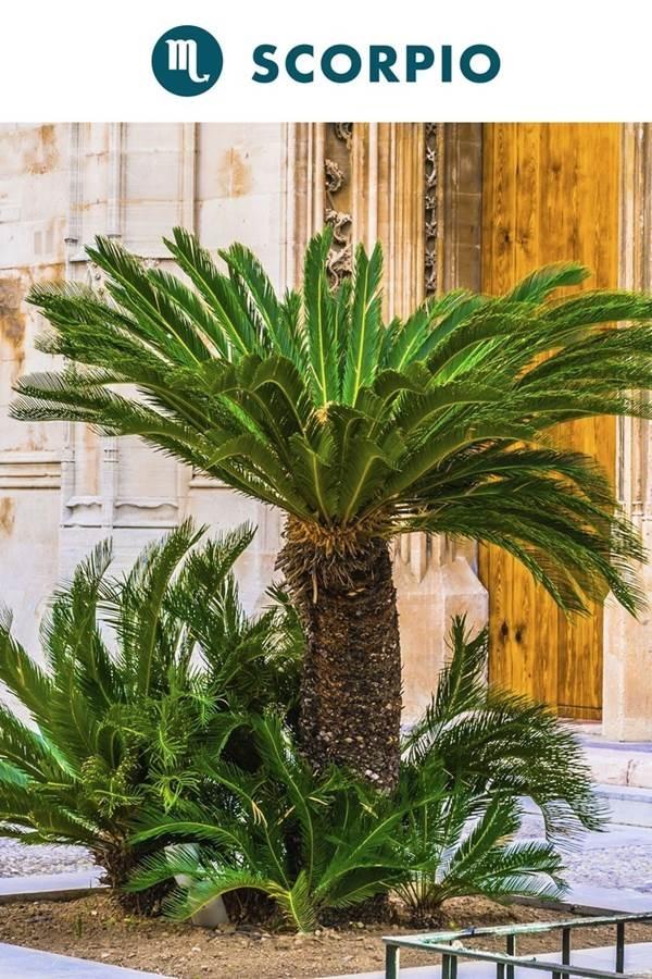 Chọn cây cảnh trong nhà theo cung Hoàng đạo hợp mệnh gia chủ-8