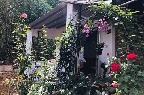 1 năm trốn phố về Bình Phước trồng rau, Kiều Trinh khoe vườn nhà trĩu quả-1