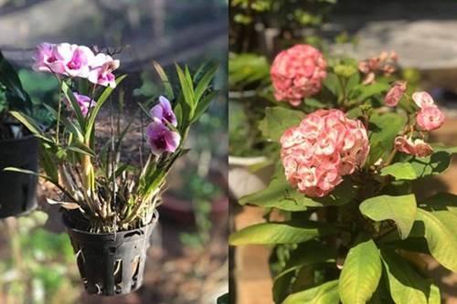 1 năm trốn phố về Bình Phước trồng rau, Kiều Trinh khoe vườn nhà trĩu quả-6