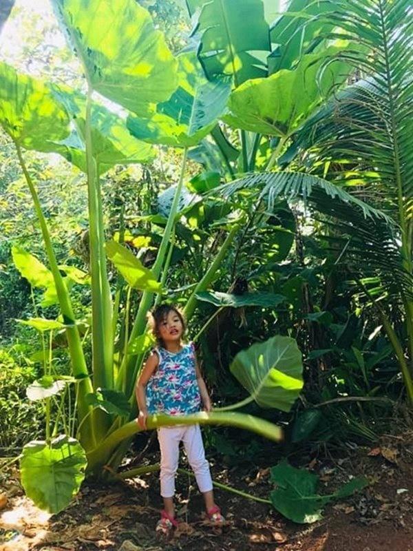 1 năm trốn phố về Bình Phước trồng rau, Kiều Trinh khoe vườn nhà trĩu quả-13