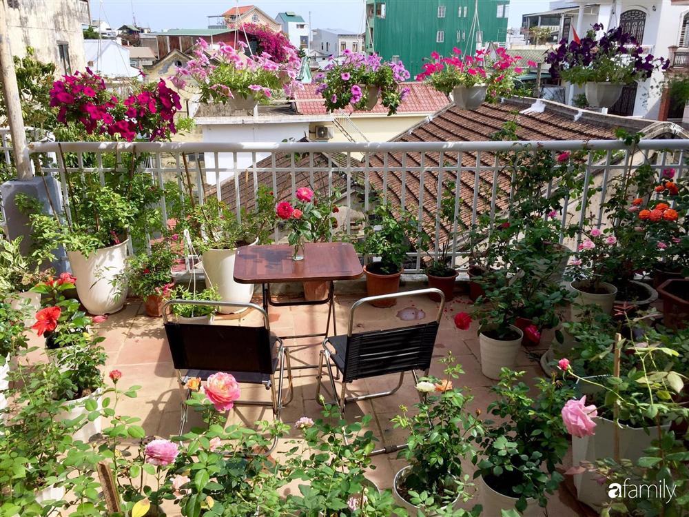 Mê hoa hồng, cô gái trẻ xứ Huế quyết tâm thức khuya dậy sớm tạo cả khu vườn hồng rực rỡ trên sân thượng-1
