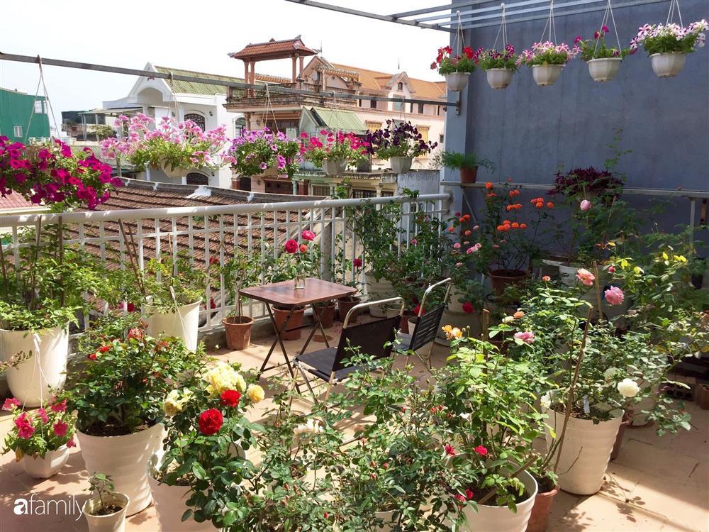 Mê hoa hồng, cô gái trẻ xứ Huế quyết tâm thức khuya dậy sớm tạo cả khu vườn hồng rực rỡ trên sân thượng-2