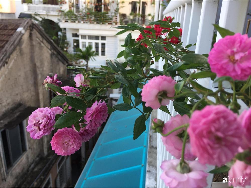 Mê hoa hồng, cô gái trẻ xứ Huế quyết tâm thức khuya dậy sớm tạo cả khu vườn hồng rực rỡ trên sân thượng-9