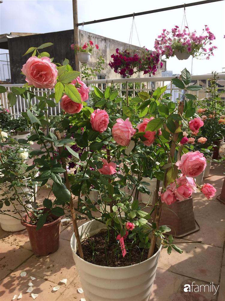 Mê hoa hồng, cô gái trẻ xứ Huế quyết tâm thức khuya dậy sớm tạo cả khu vườn hồng rực rỡ trên sân thượng-10