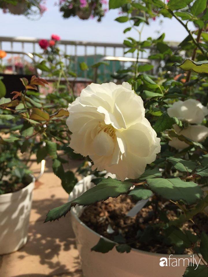 Mê hoa hồng, cô gái trẻ xứ Huế quyết tâm thức khuya dậy sớm tạo cả khu vườn hồng rực rỡ trên sân thượng-17