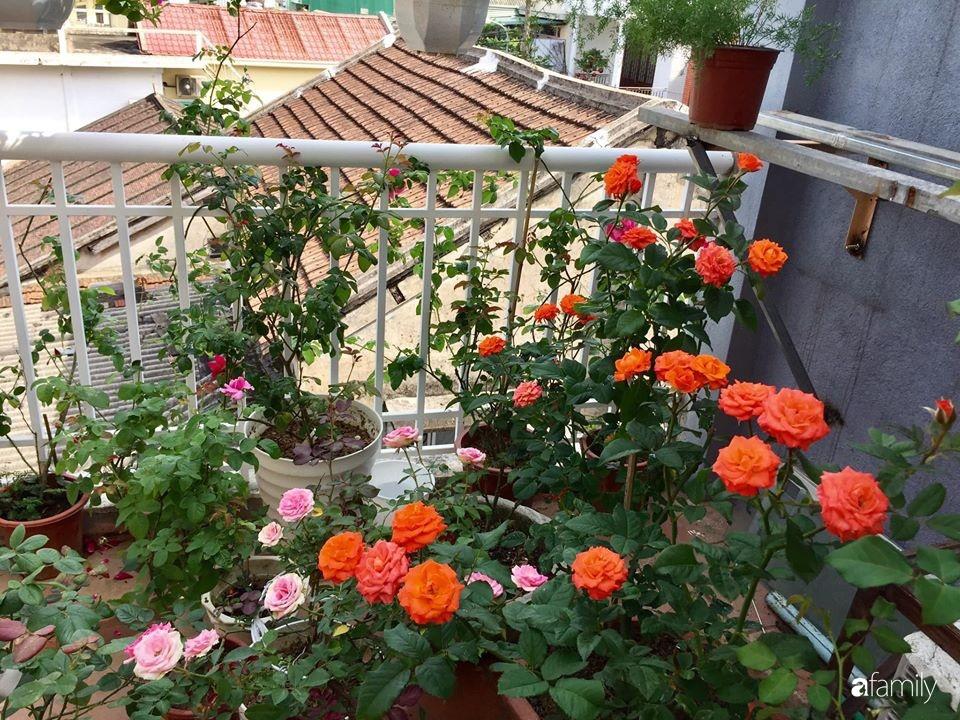 Mê hoa hồng, cô gái trẻ xứ Huế quyết tâm thức khuya dậy sớm tạo cả khu vườn hồng rực rỡ trên sân thượng-20