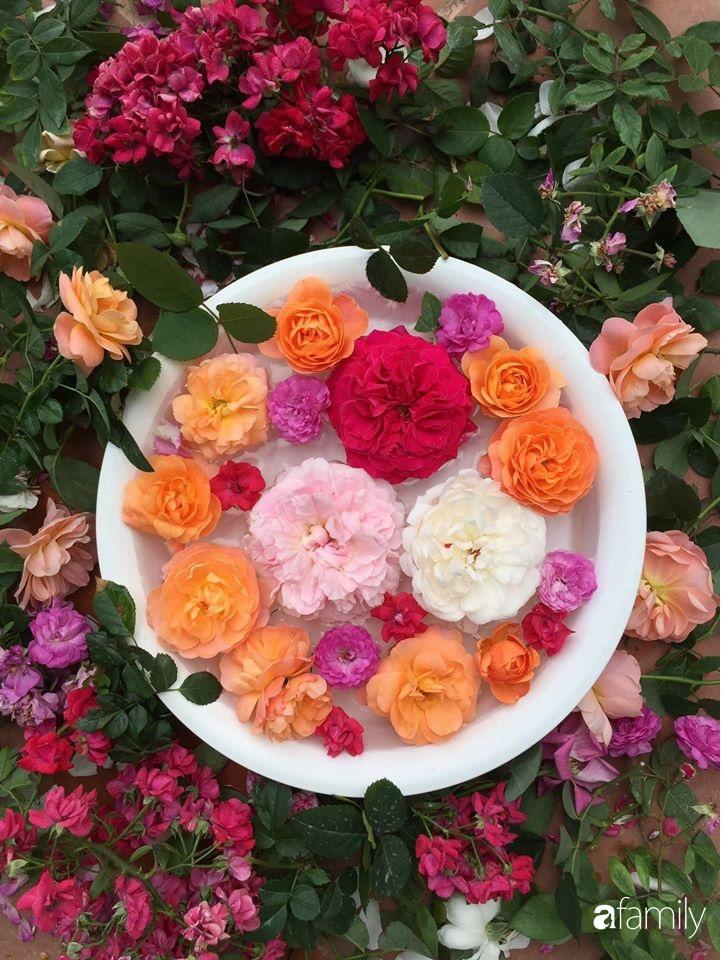 Mê hoa hồng, cô gái trẻ xứ Huế quyết tâm thức khuya dậy sớm tạo cả khu vườn hồng rực rỡ trên sân thượng-21