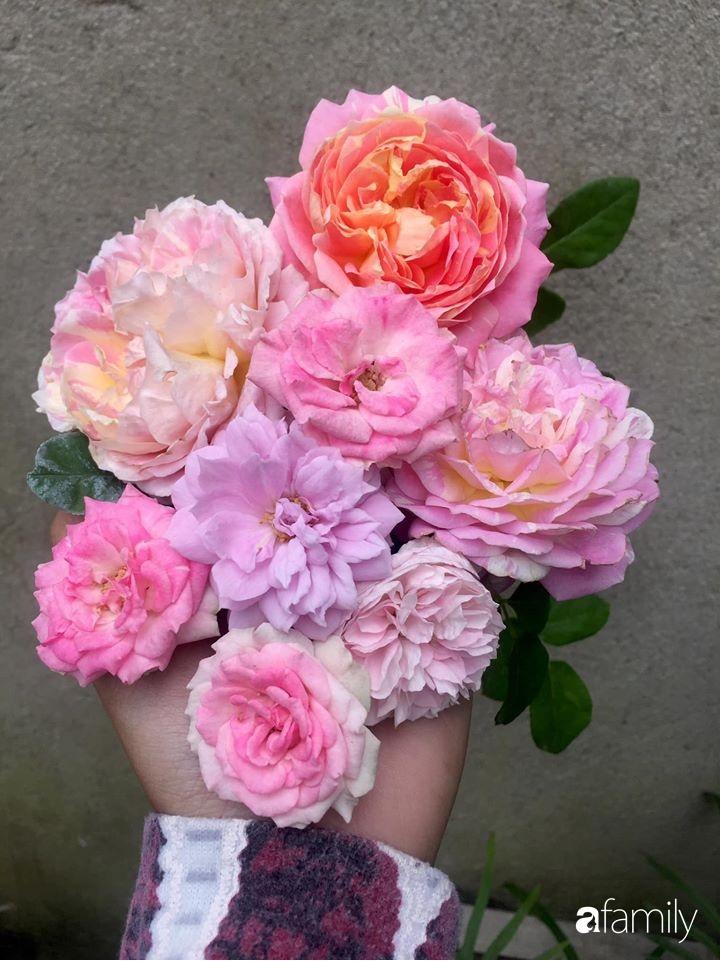 Mê hoa hồng, cô gái trẻ xứ Huế quyết tâm thức khuya dậy sớm tạo cả khu vườn hồng rực rỡ trên sân thượng-22
