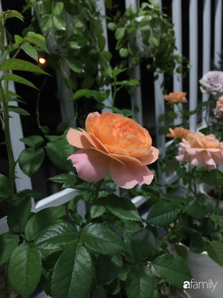Mê hoa hồng, cô gái trẻ xứ Huế quyết tâm thức khuya dậy sớm tạo cả khu vườn hồng rực rỡ trên sân thượng-26