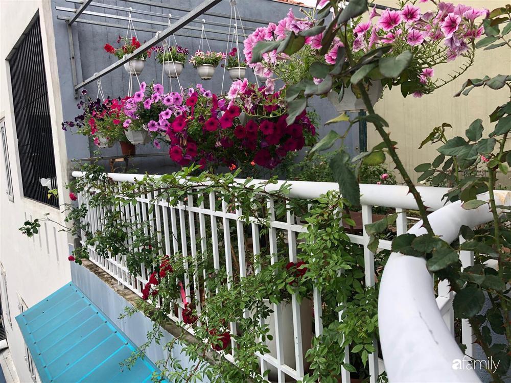Mê hoa hồng, cô gái trẻ xứ Huế quyết tâm thức khuya dậy sớm tạo cả khu vườn hồng rực rỡ trên sân thượng-27