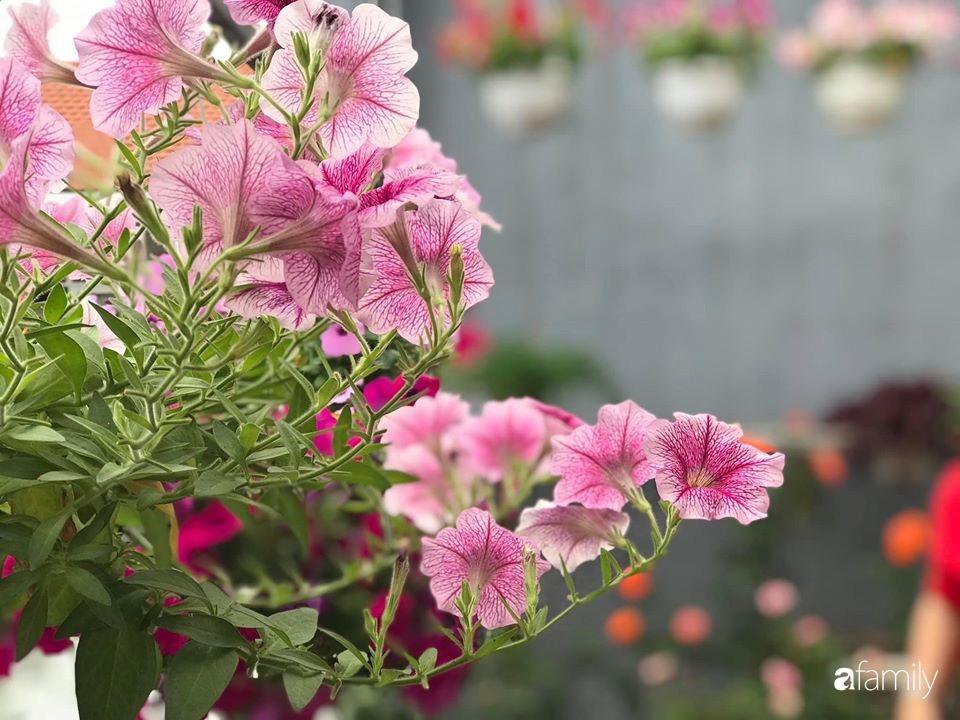 Mê hoa hồng, cô gái trẻ xứ Huế quyết tâm thức khuya dậy sớm tạo cả khu vườn hồng rực rỡ trên sân thượng-29